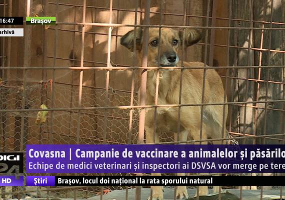 Covasna | Campanie de vaccinare a animalelor şi păsărilor