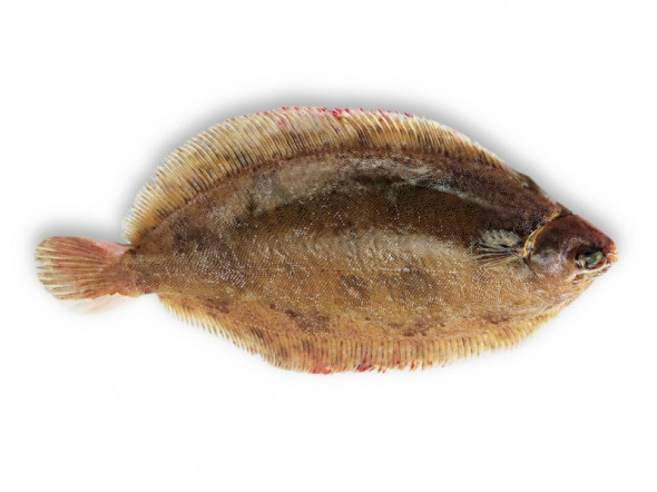 lemon sole (Rotzunge)