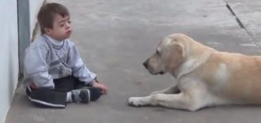 filmuletul-care-te-va-emotiona-pana-la-lacrimi-cum-reactioneaza-catelul-din-imagine-cand-il-vede-pe-baietelul