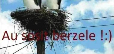 meme-vin-berzele-pinguini-header