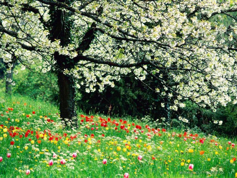 primavara flori soare - meteo.ro