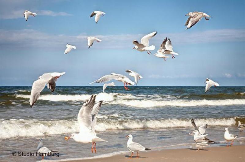 marea baltica