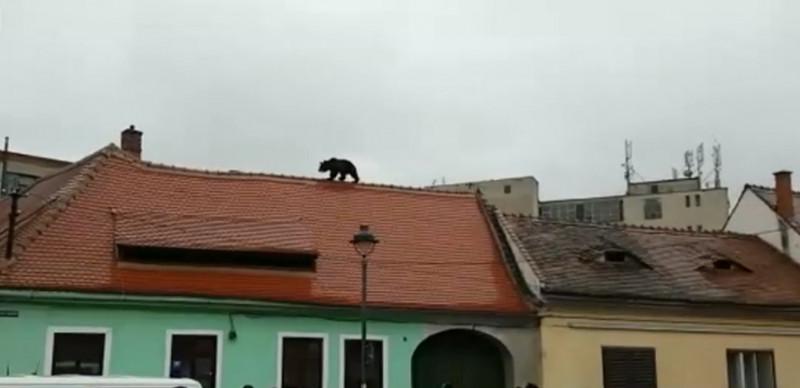 urs pe acoperis