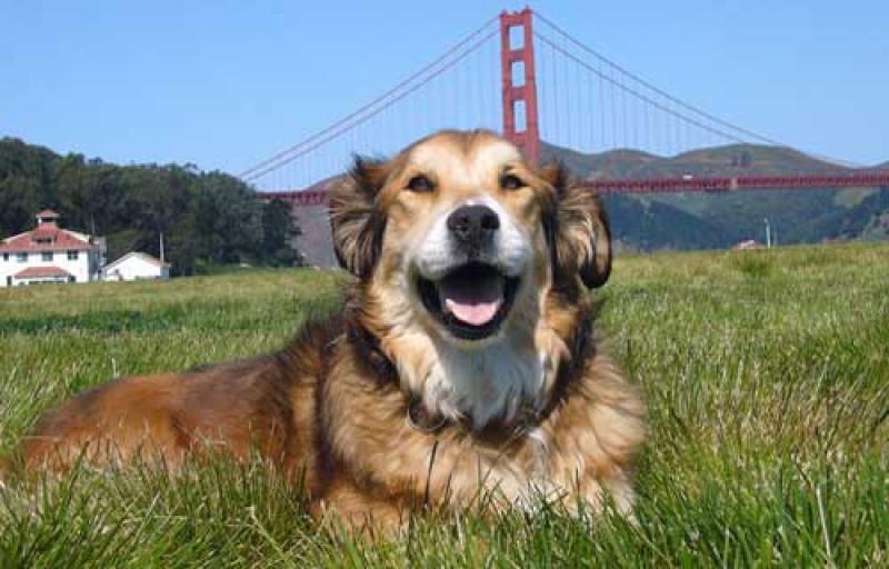 dog-lovers-san-francisco-7