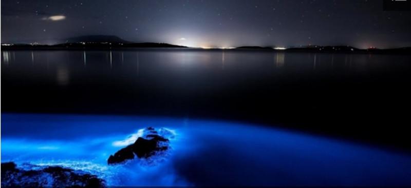 blue tasmania captura