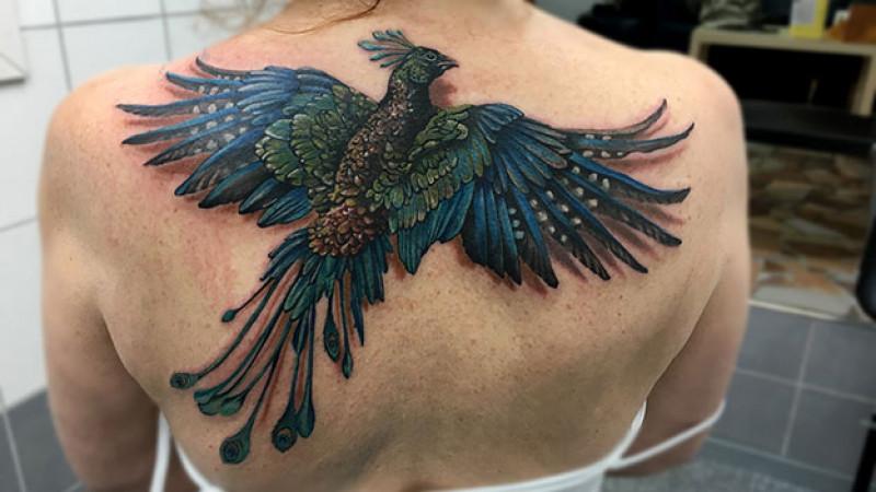phoenix2.5577377
