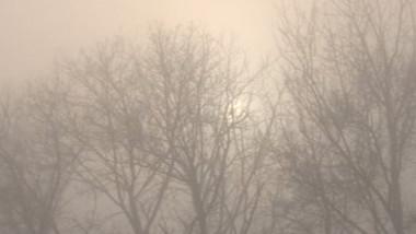 copaci ceata