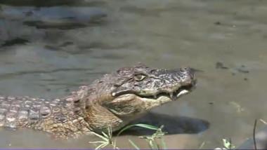 rio aligatori