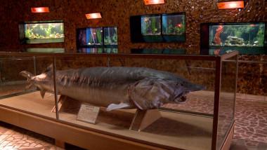 muzeul apelor