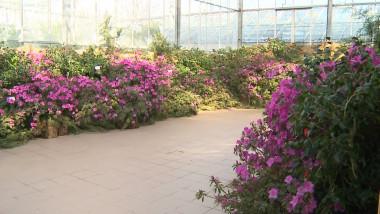 expozitie botanica