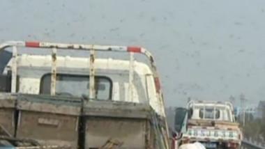 albine-trafic