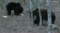 numaratoare ursi