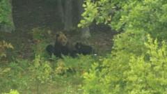 ursoaicapui