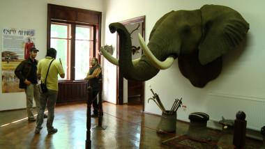 elefant si oameni