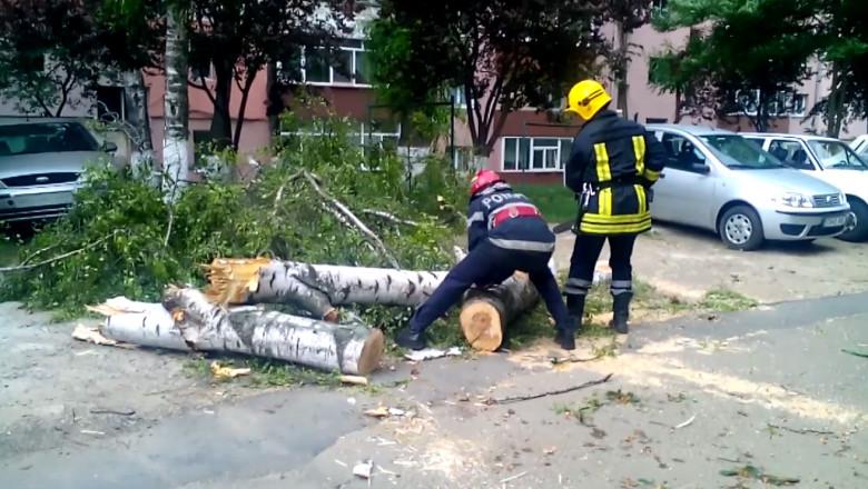 copac cazut furtuna sv