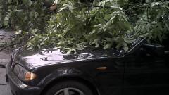 masina copac