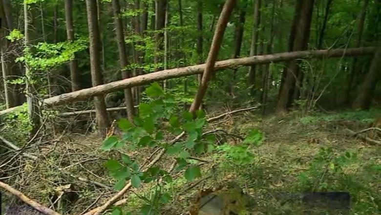padure cu arbori cazuti