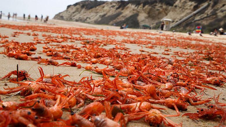 crab-beach-epa 3347137b