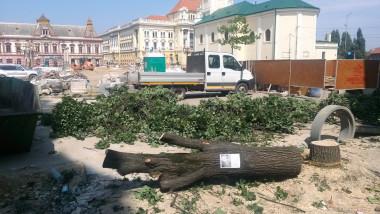 copaci taiati 30 iunie 2015 4