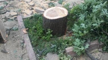 copaci taiati 30 iunie 2015 12