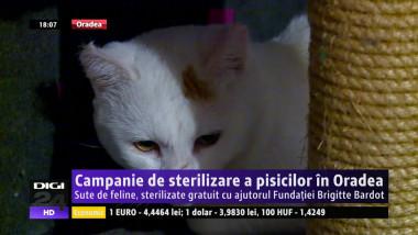 pisici 130715