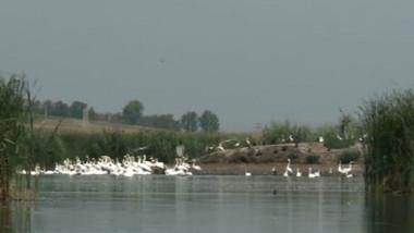 jijia mica delta a moldovei 08 08 2015 captura