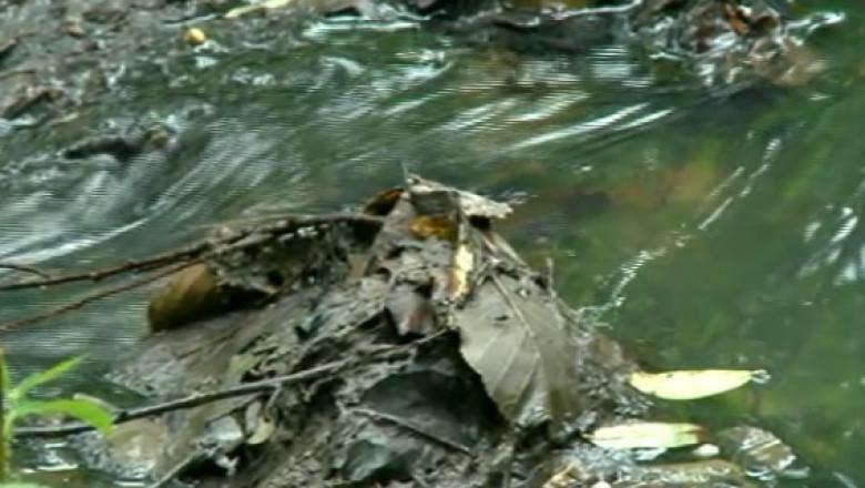primaria suncuius amenda crisul repede poluare captura 24 08 2015