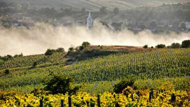 lilac winery romania
