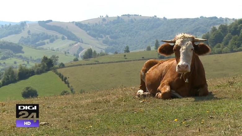 vaca ecologica