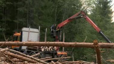 Biziday|A scăzut volumul de lemn provenit din defrișări ilegale