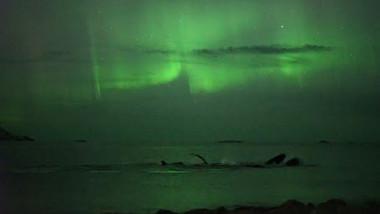 balene filmate in lumina aurorei boreale 09 10 2015