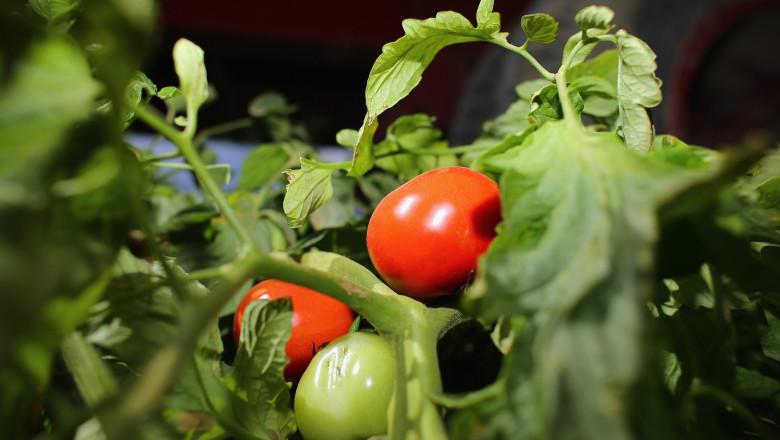 rosii gradina legume - GettyImages - 26 august 2015