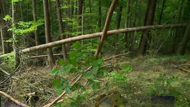 padure cu arbori cazuti-1