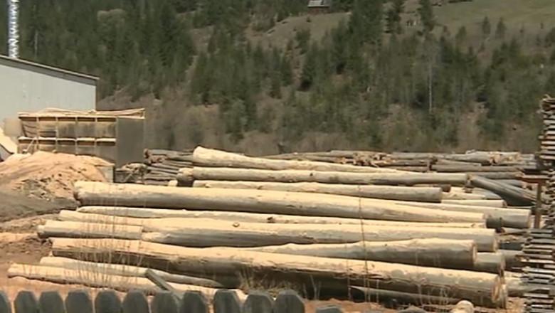 cod silvic copaci taiati lemn