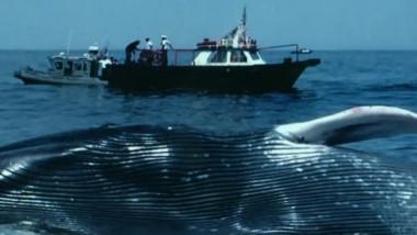 balena albastra esuata