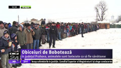 BOBOTEAZA