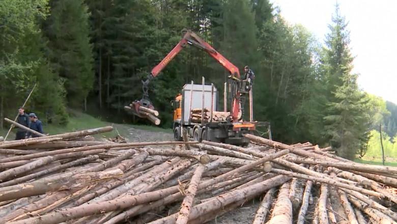 lemn taiat padure-1