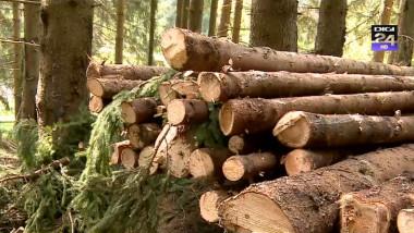 pom padure lemn arbori taiat