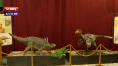 dinozauri MM
