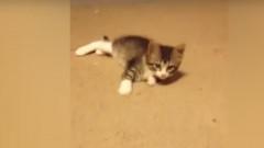 pisica virale