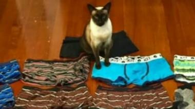 pisica furt lenjerie