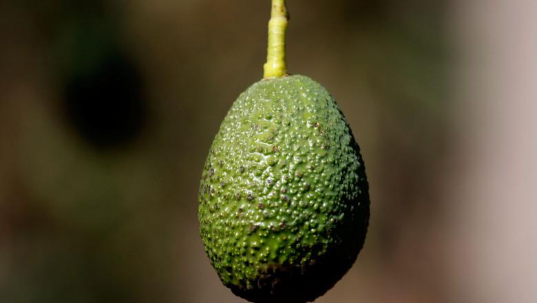 avocado getty
