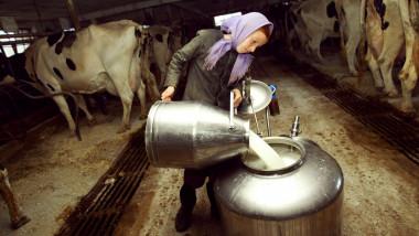 lapte grajd vaci ferma GettyImages-2663102