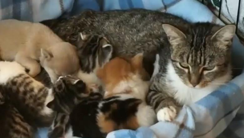 caine cu pisici captura