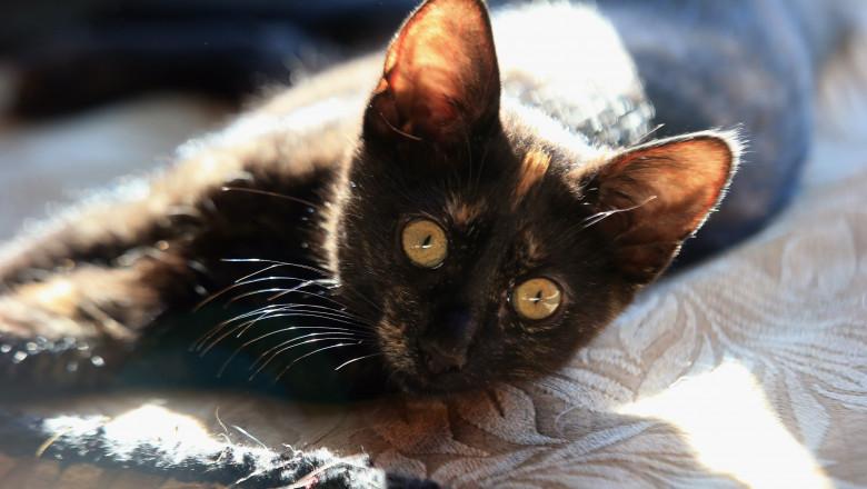 pisica getty