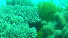 bariera corali