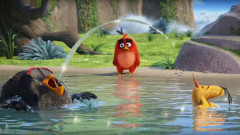 angry birds film crop youtube