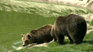 ursi - captura