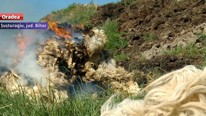 lana foc