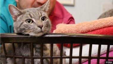 pisica prinsa in masina de spalat bbc